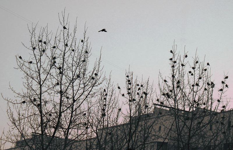 "photo ""Fruit birds."" tags: nature, wild animals"