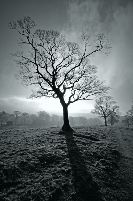 "фото ""Frosty Morning"" метки: черно-белые, пейзаж, закат"