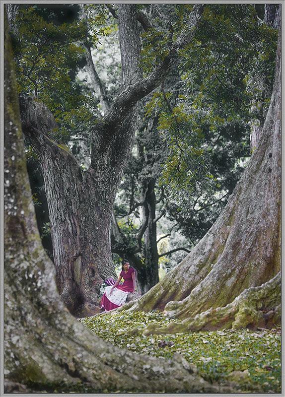 """photo """"***"""" tags: landscape, portrait, forest, woman"""