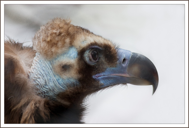 "фото ""Гордый птиц."" метки: ,"
