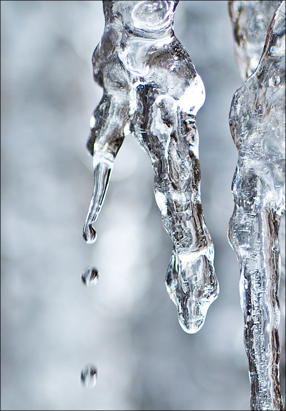 "photo ""Ice Snake"" tags: macro and close-up,"
