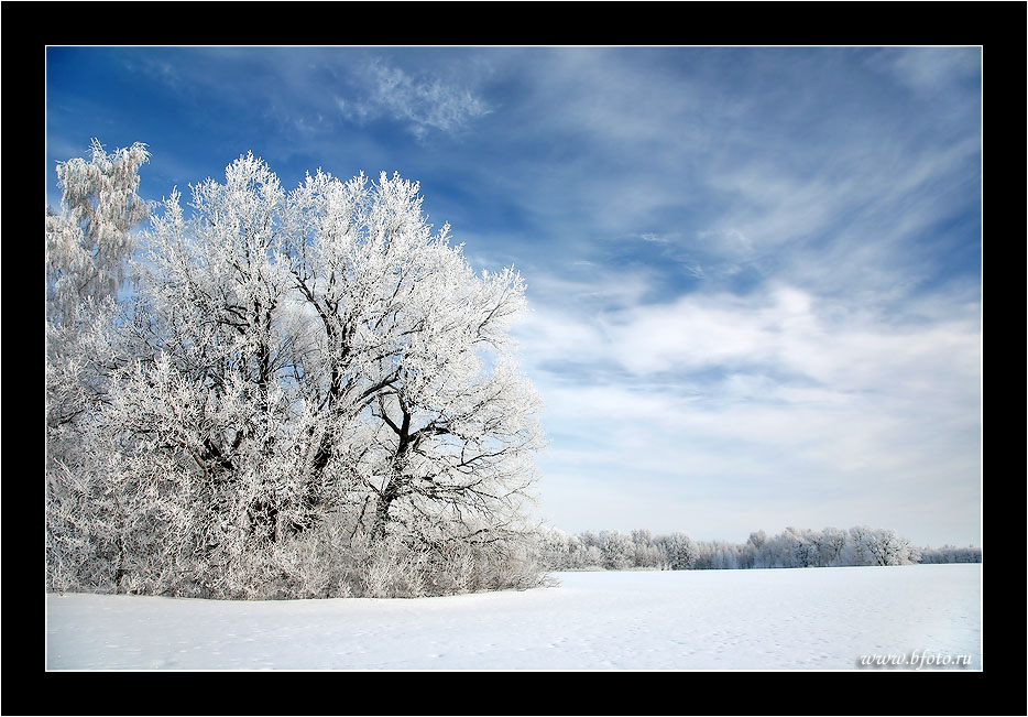 """photo """"Winter tree photo, фото зима"""" tags: landscape, forest, winter"""