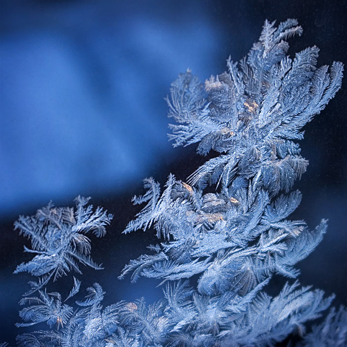 "photo ""Winter Waltz"" tags: misc., abstract,"