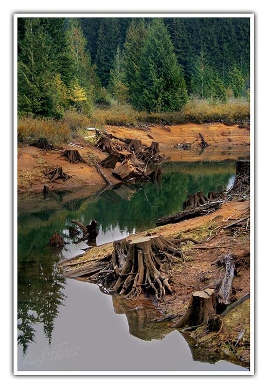 """фото """"* ** *"""" метки: пейзаж, лес, осень"""