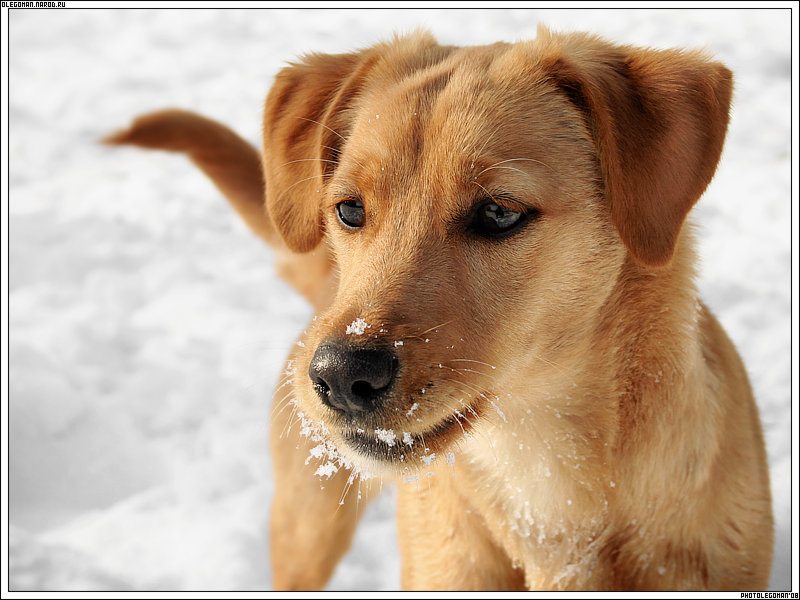 "photo ""dOg On snOw"" tags: nature, pets/farm animals"