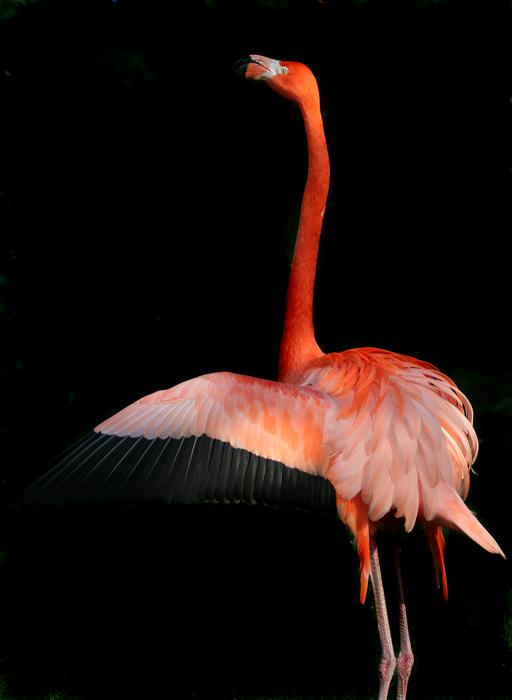 "фото ""Па"" метки: природа, дикие животные"