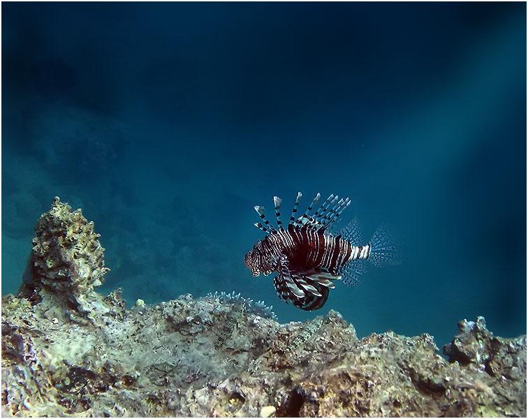 "фото ""На краю рифа"" метки: подводные,"