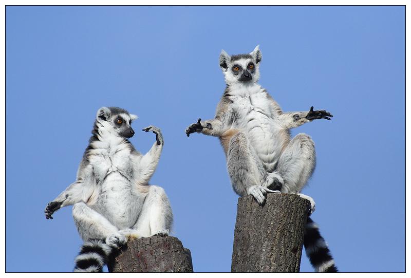 Год друзьями, смешные картинки до слез для поднятия настроения с животными