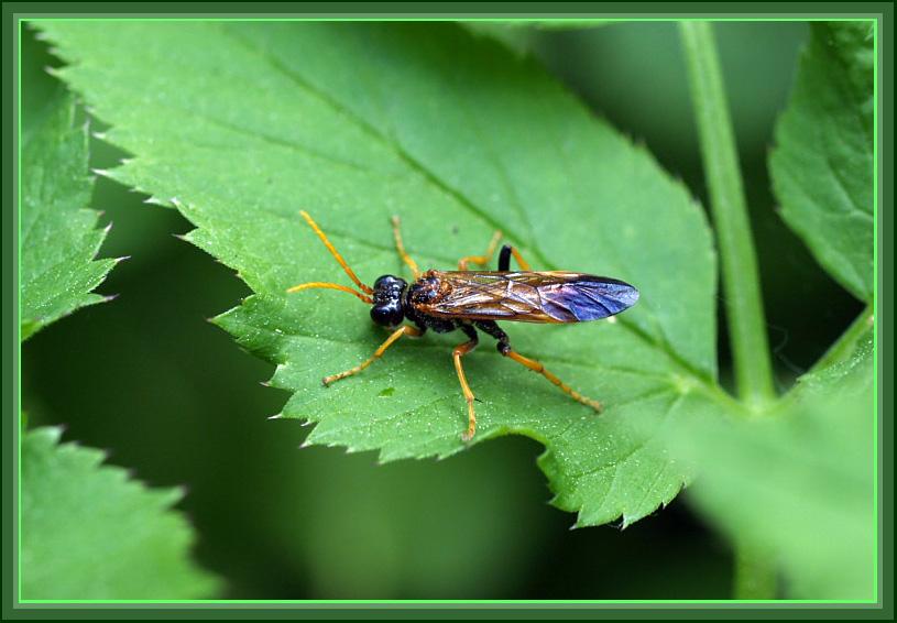 Частное фото муха