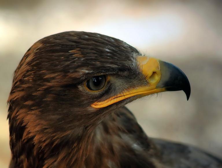 картинки царь птица божья милость хранит