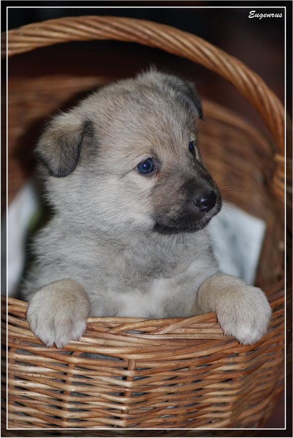 """фото """"Dog"""" метки: природа, домашние животные"""