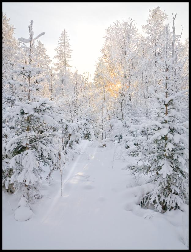 позволяет повысить зимний пейзаж картинки книжный формат профессор, мать пианистка