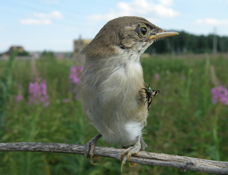 """photo """"Chick  with brooch"""" tags: nature, wild animals"""