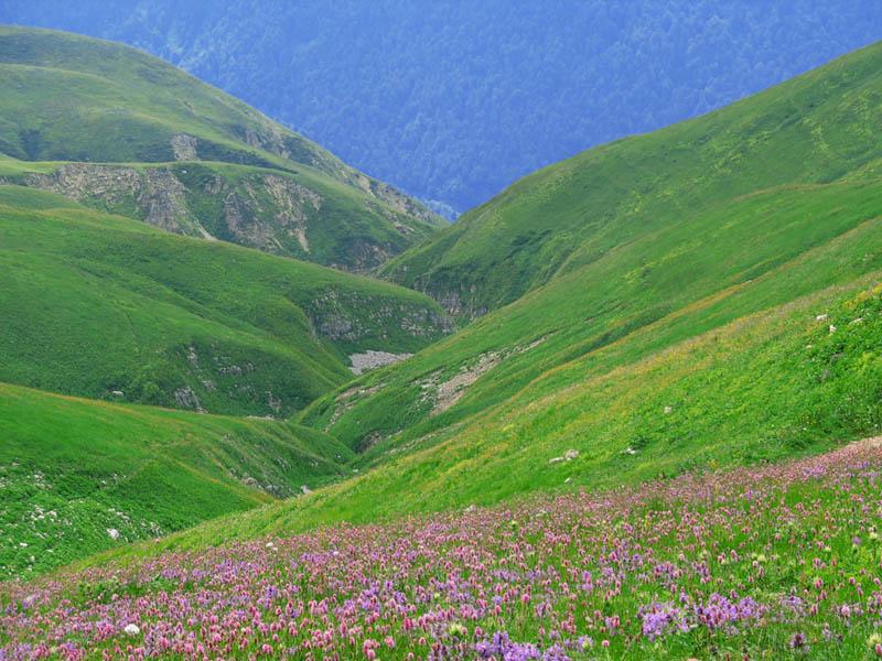 сторона альпийские луга в абхазии фото находятся либо