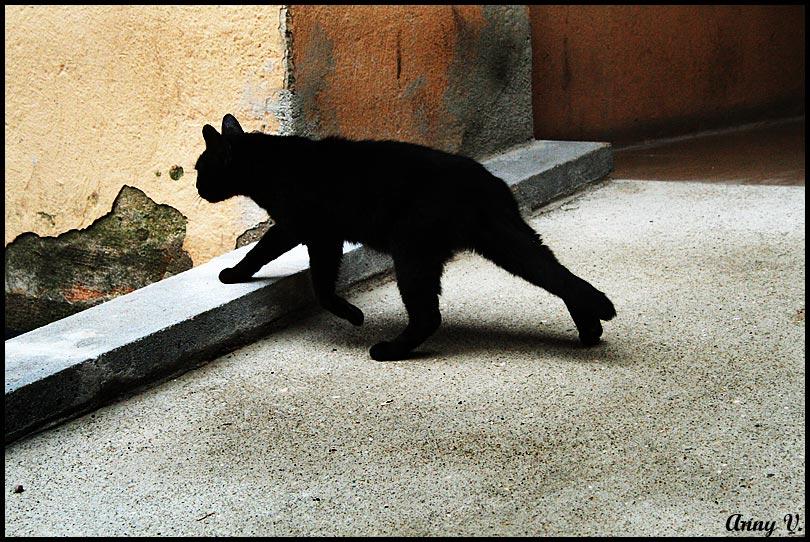 "photo ""кот, кошка, Испания"" tags: nature, pets/farm animals"