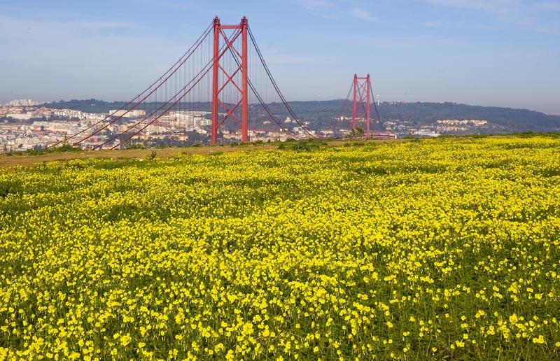"""фото """"SPAN & FLOWERS"""" метки: пейзаж, город, весна"""