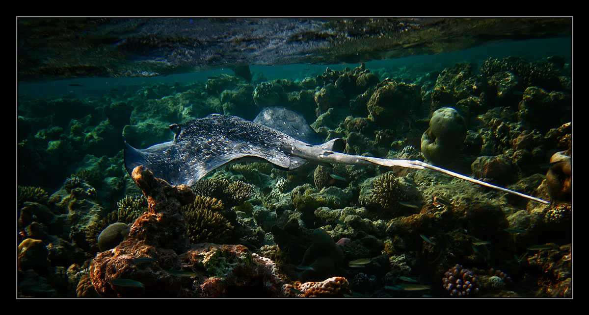 """photo """"***"""" tags: underwater, travel, Asia"""