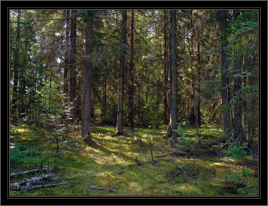 """photo """"***"""" tags: , forest, summer"""