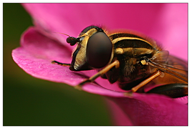 """photo """"Just another bug shot"""" tags: nature, macro and close-up, insect"""