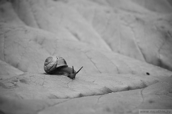 "photo ""Pegasus"" tags: macro and close-up, black&white,"