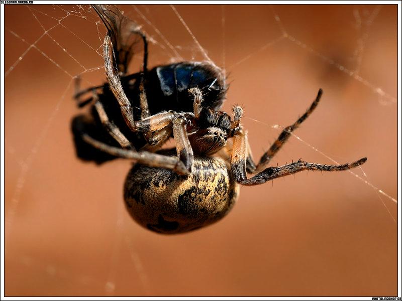 "photo ""Greedy"" tags: nature, macro and close-up, insect"
