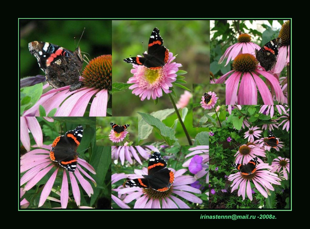 """photo """"***"""" tags: nature, montage, insect"""