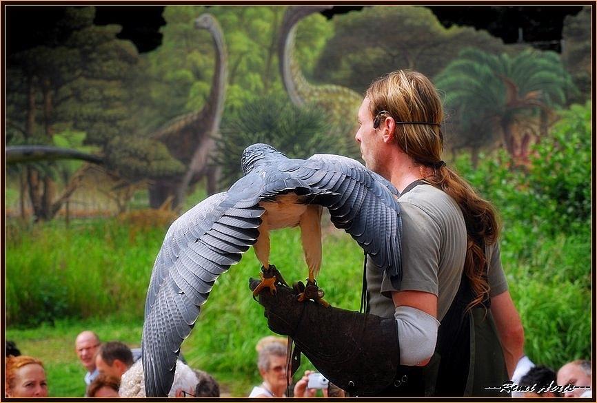 """photo """"wild bird demonstration"""" tags: portrait, nature, man, wild animals"""