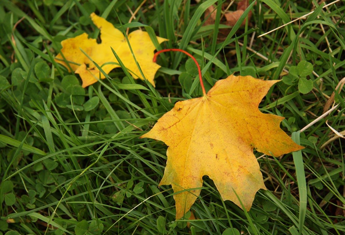 """photo """"Autumn letters"""" tags: landscape, autumn, forest"""