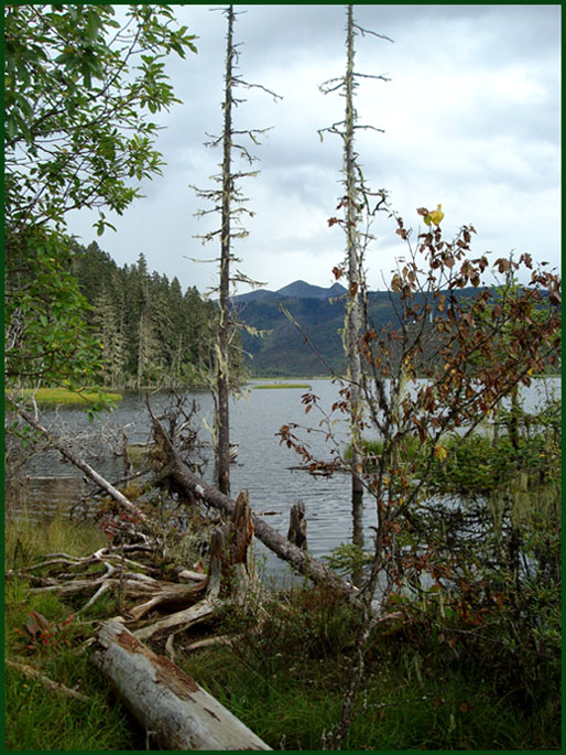 "photo ""Landscape-13"" tags: landscape, forest, water"