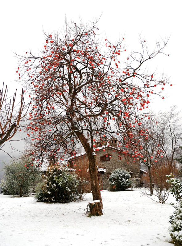 "photo ""The first snow in Tuscany"" tags: landscape, travel, Europe, winter"