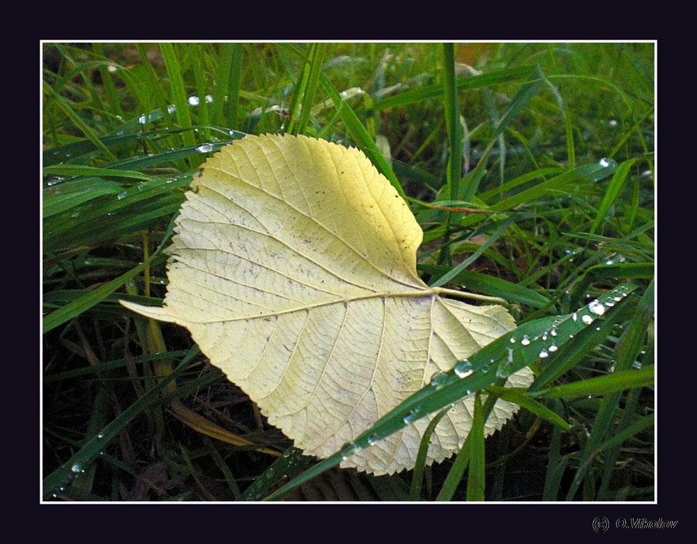 """photo """"***"""" tags: nature, macro and close-up,"""