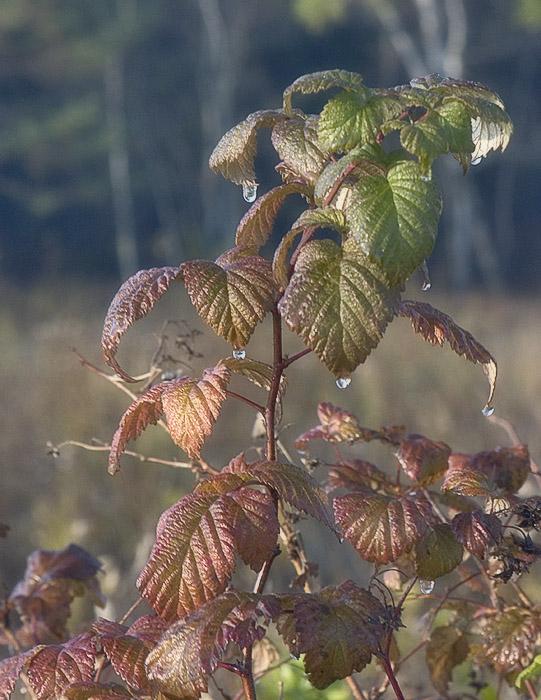 """фото """"Слезы уходщей Осени"""" метки: пейзаж, природа, осень, цветы"""