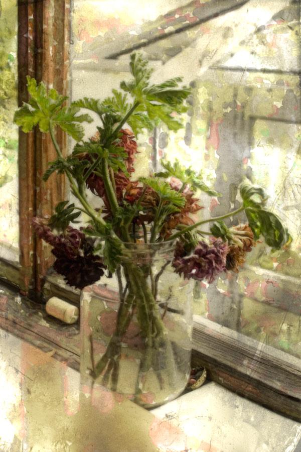 """фото """"Дачные акварельки"""" метки: фотомонтаж, природа, цветы"""