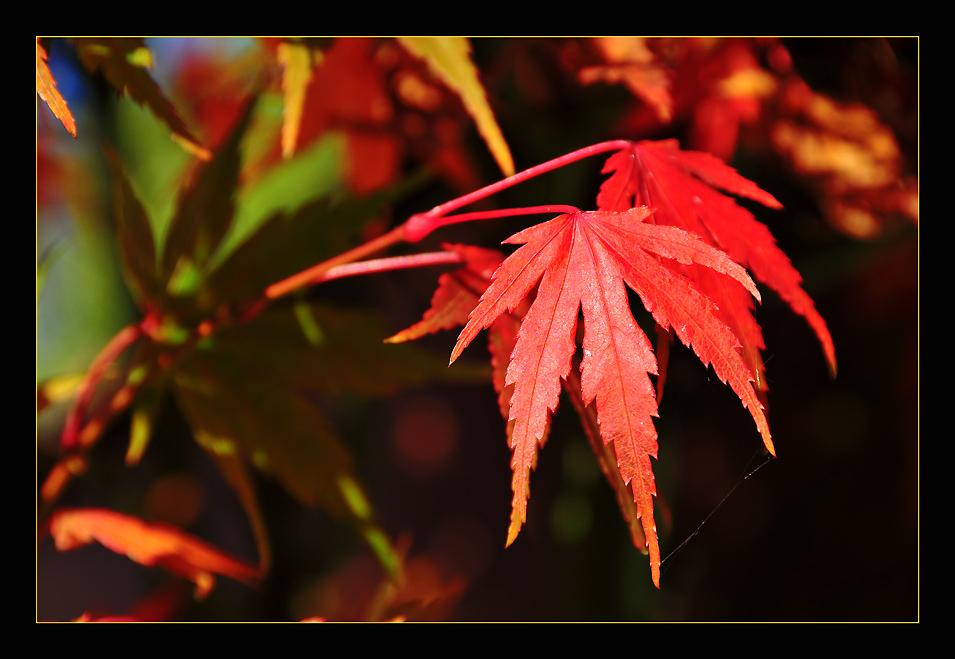 """фото """"Colors"""" метки: природа, макро и крупный план, цветы"""