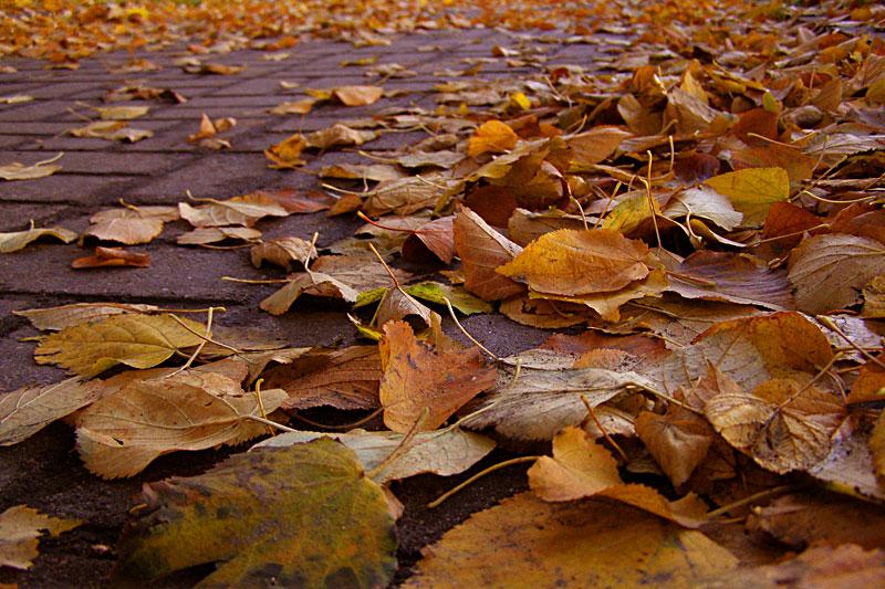 """фото """"Золото на дороге"""" метки: пейзаж, осень"""