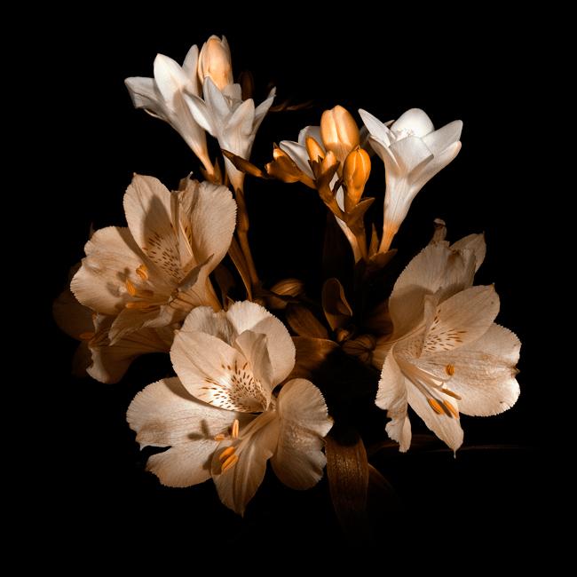 "фото ""КГБ"" метки: природа, цветы"