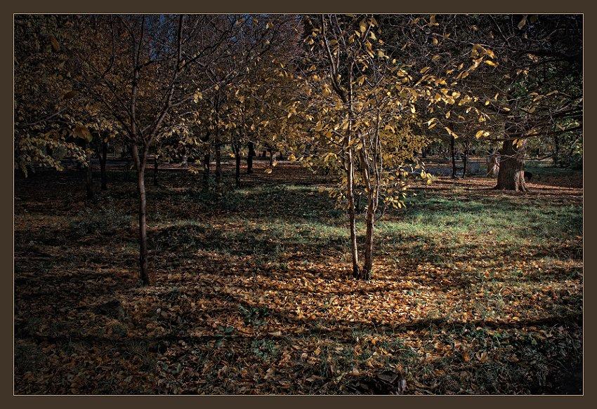 """фото """"парк.осень"""" метки: пейзаж, осень"""