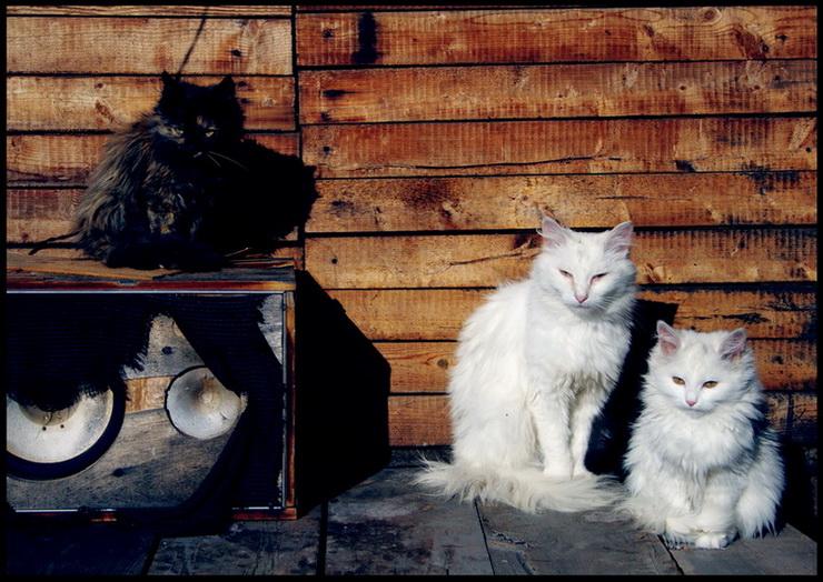 """фото """"три грации"""" метки: природа, жанр, домашние животные"""