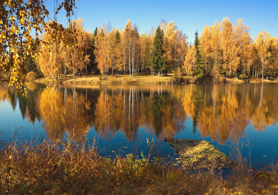 "фото ""Последняя осень мостика"" метки: пейзаж, осень"