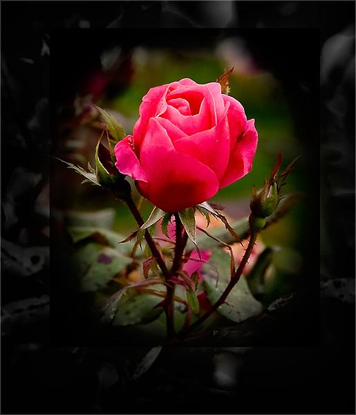 """фото """"осень"""" метки: природа, цветы"""