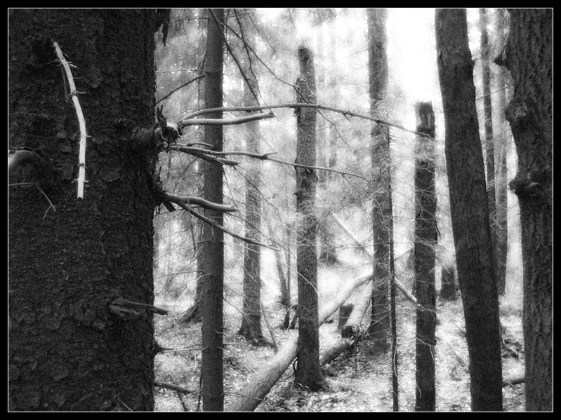 """photo """"No Tickets."""" tags: abstract, landscape, forest"""