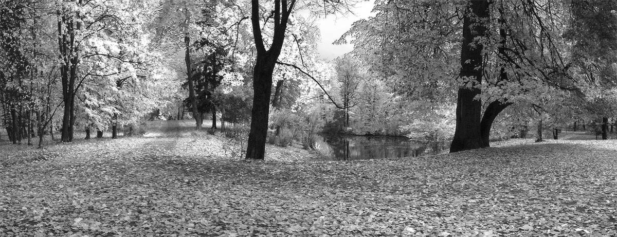 "фото ""Осень в Царском Селе"" метки: пейзаж, осень"