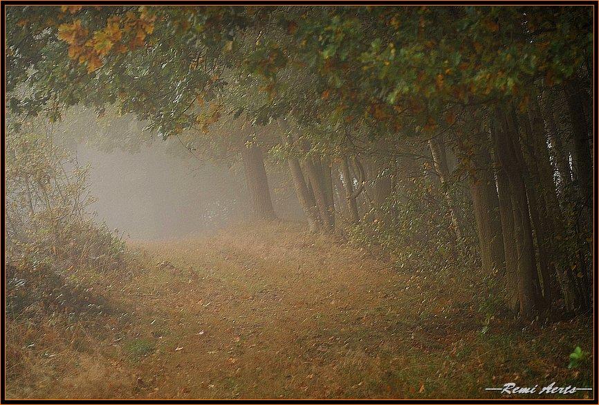 "фото ""one misty morning"" метки: пейзаж, закат"