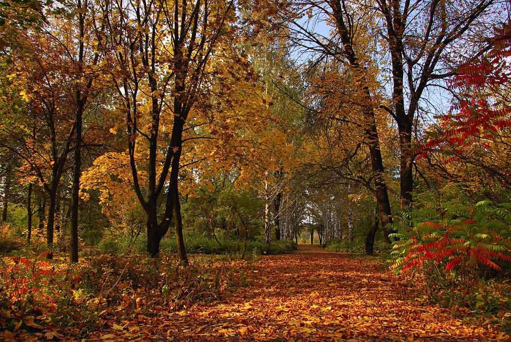 """фото """"Музыка осени"""" метки: пейзаж, лес, осень"""