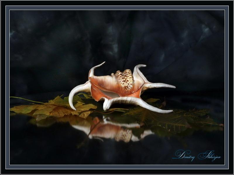 "фото ""Скорпион"" метки: натюрморт,"