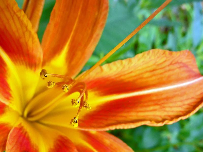 """фото """"Цветок"""" метки: природа, цветы"""