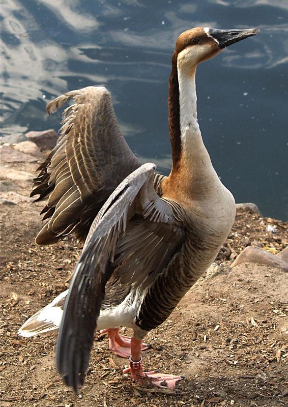 """фото """"Воооот такую вчера рыбу поймал..."""" метки: природа, дикие животные"""