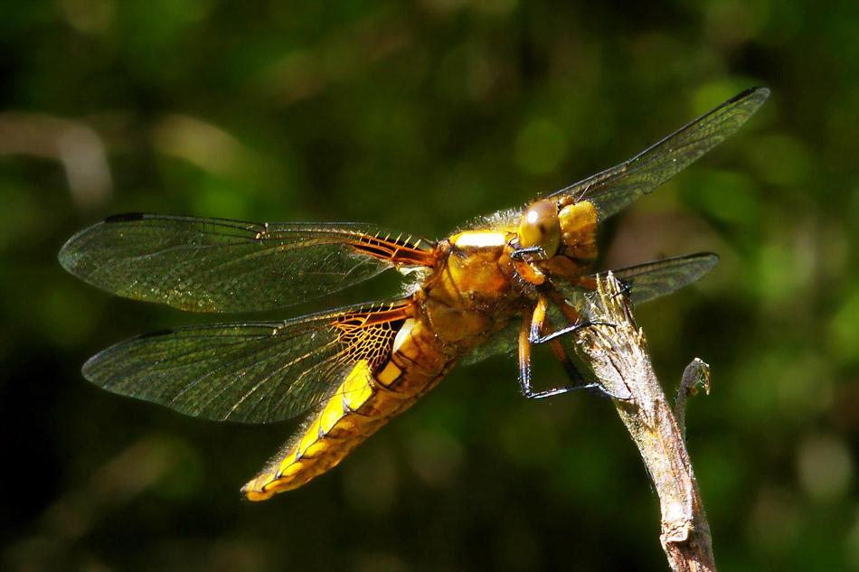 "фото ""On the stick"" метки: природа, насекомое"