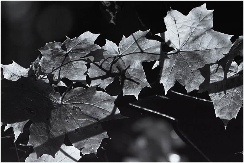 Осень картинка черно-белая