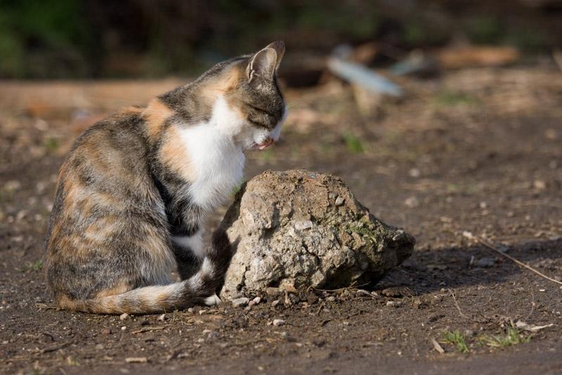 """фото """"Медитация"""" метки: природа, домашние животные"""